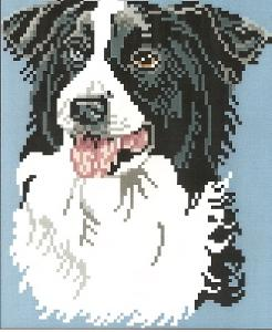 Brenda Franklin DB 316 Border Collie. 82 x 100 stitches. Cross Stitch, Petit Point, Needlepoint, Waste Canvas, & Rug Hooking Pattern.